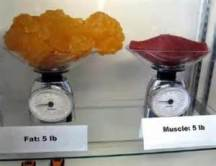 A pound of fat is a much larger mass than a pound of muscle.