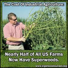 super weeds